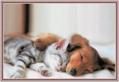 caresser un chien visiteur est bon pour la santé Hfmyx95u